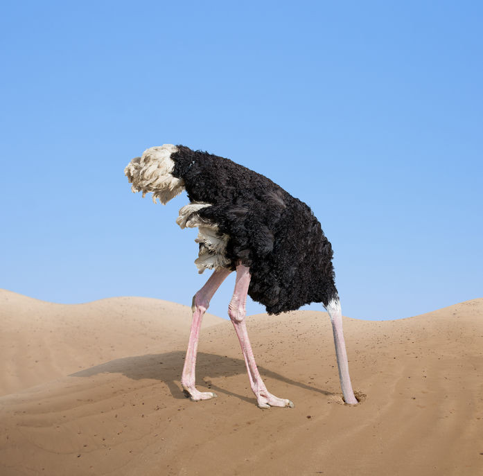 Don't be like an ostrich with your head in the sand... We can help you understand the finances of your divorce.